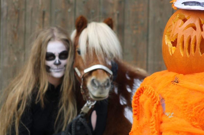 Habe Fertig – Fotoshooting Halloween mit Pferd