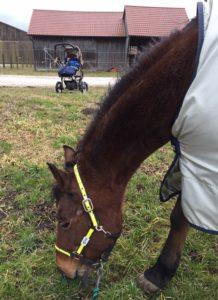 Baby & Pferd- Zeitmanagement