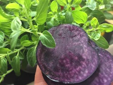 Rund, bunt & gesund: Kartofflige Resteverwertung