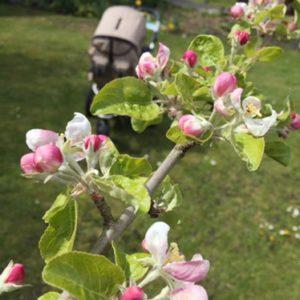 Giftpflanzen im Garten – Gefahr für Kind, Kegel & Hobbygärtner