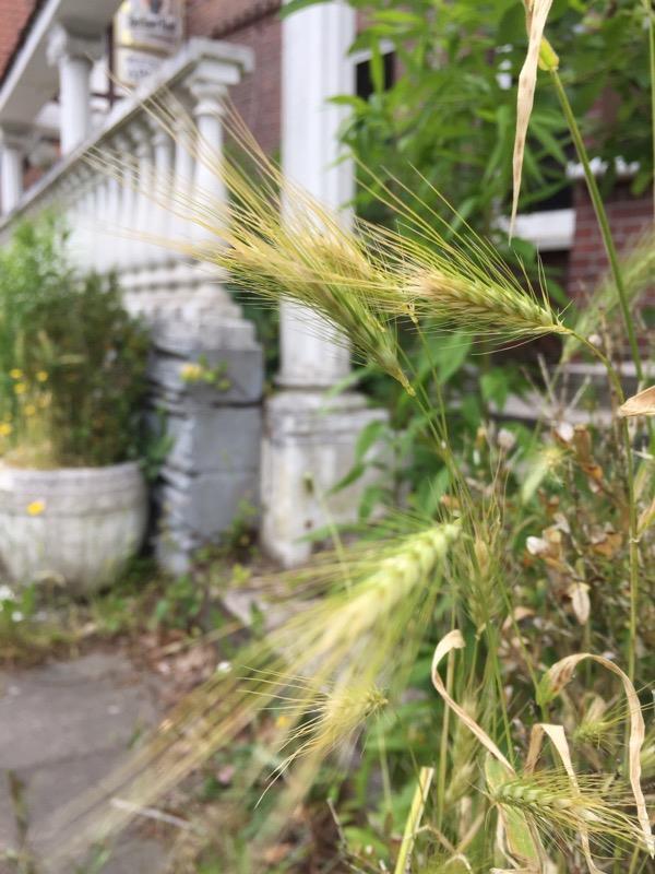Blogserie Ostseeurlaub – Kurstadt im Kurzurlaub