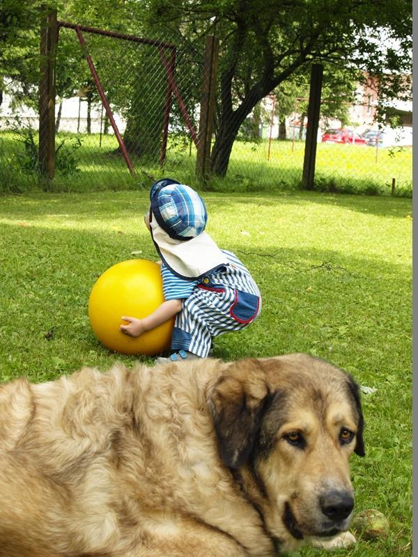hunde-kinder-problem_kinder-hunde-tipps