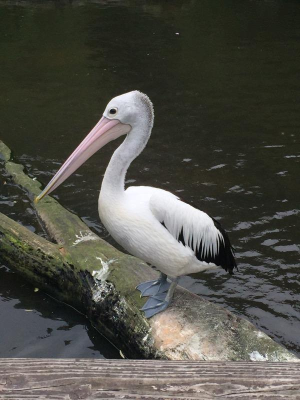 Reisetipps: Prädikat kinderfreundlich – Weltvogelpark Walsrode