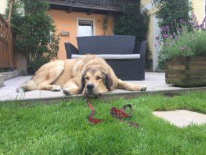 Der tut nix – warum Hunde Kinder manchmal beissen und was ihr dagegen tun könnt