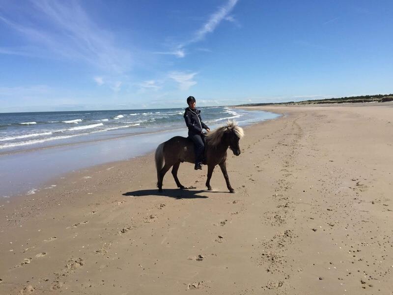 Elternblog, Islandpferd, Dänemark, reiten am Strand, Kuchenerbse