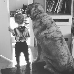 hunde-und-kinder_problem-kind-hund_elternblog