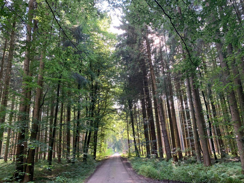 bayern-familienurlaub_bayern-mit-kindern_tipps-bayern-kinder_stauden-westliche-wälder-kinder