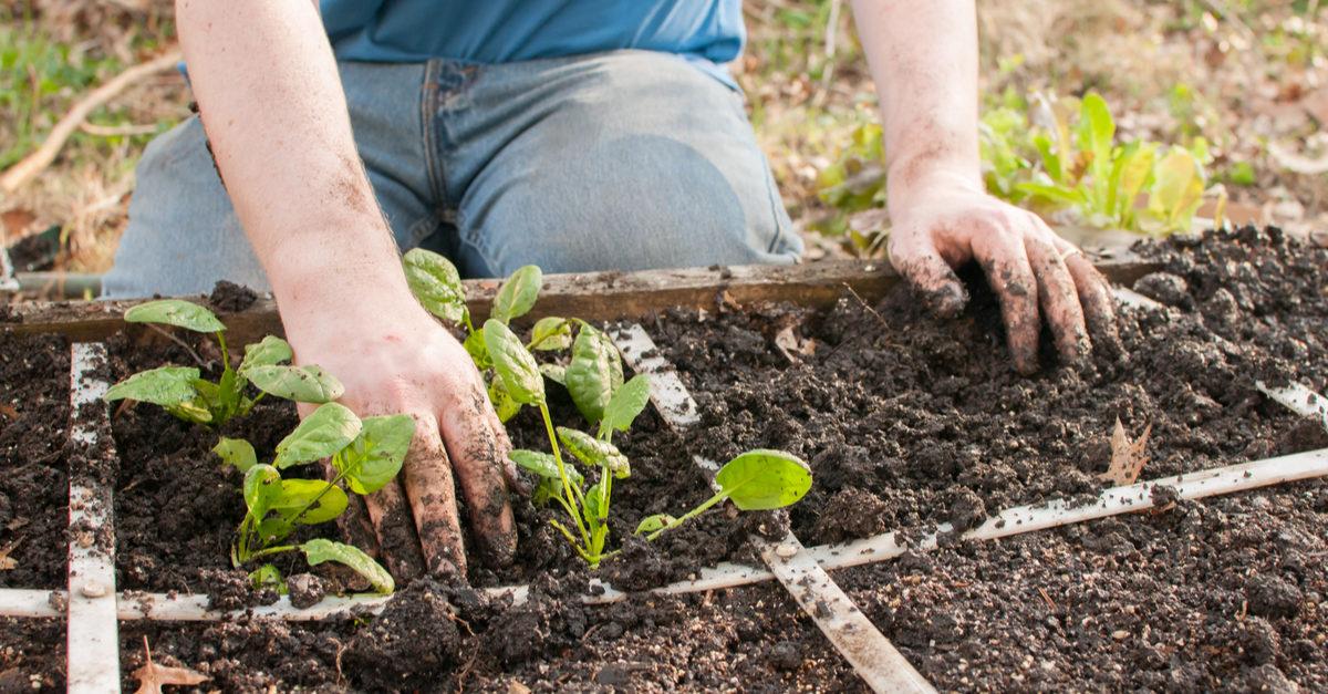 Es geht auch einfach – Gärtnern (mit Kindern) mit wenig Zeit & Platz [Rezension]