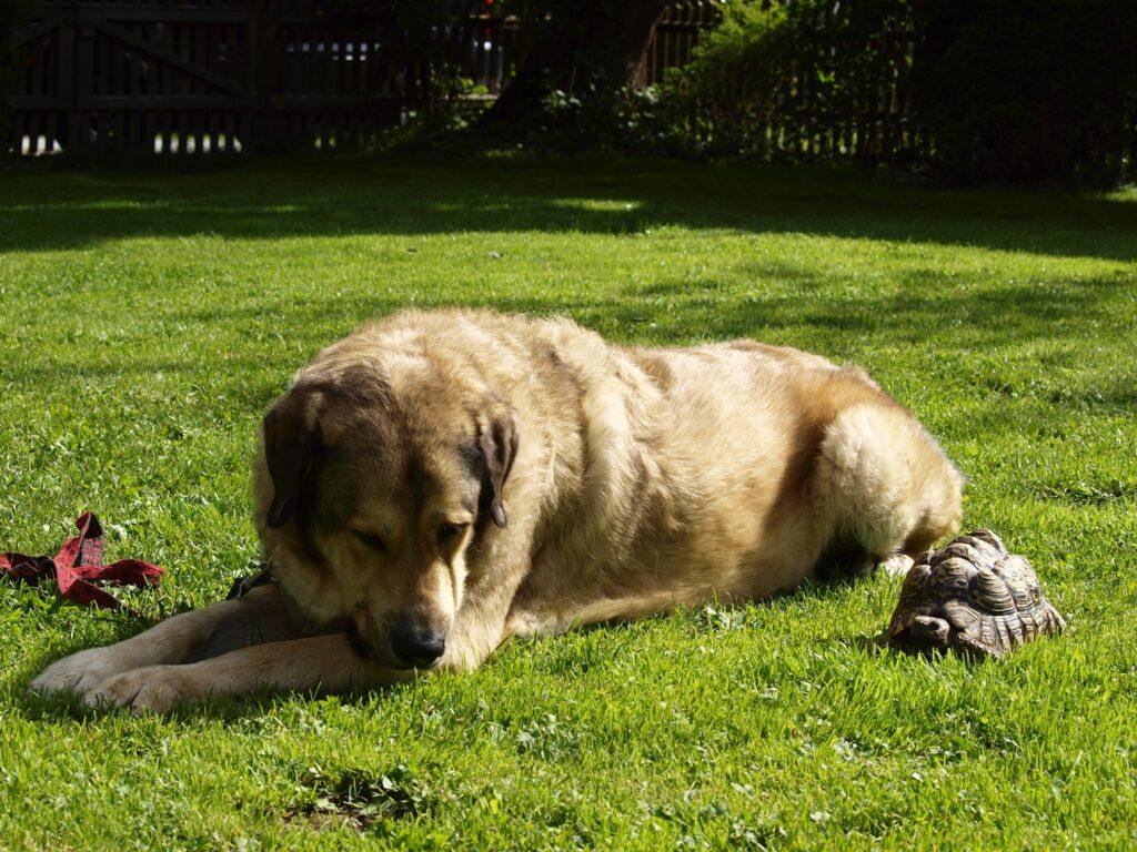 familienhund_zeit-hund-kinder