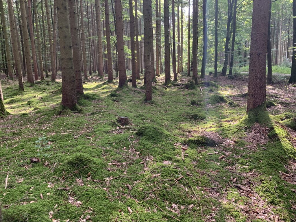 augsburg-umgebung-wohnmobil_westliche-wälder-wohnmobil